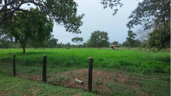 Fazenda A Venda Em Itacajá-to (dupla Aptidão) - 745