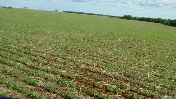 Fazenda Para Venda Em Maracaju, Centro - 1058