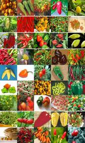 Kit 45 Variedades Sementes De Pimenta Especiais Frete Grátis