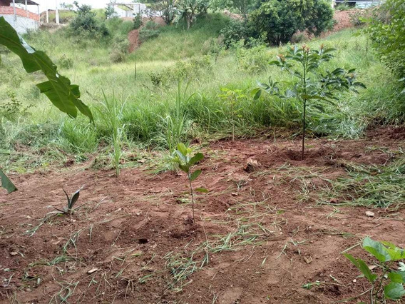 Terreno Em Janiru 10 X60