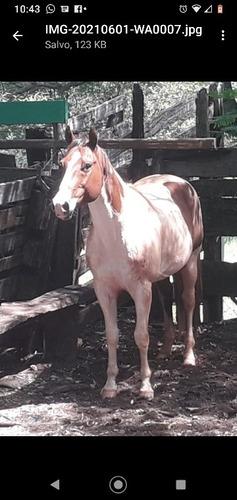 Imagem 1 de 4 de Vendo Cobertura Paint Horse Po