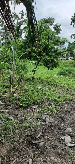 Terreno Plano Centrico A Orilla De Carretera.guabito Changui