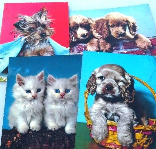 4 Tarjetas Postales Gatos Y Perros Kruger Alemania Retro