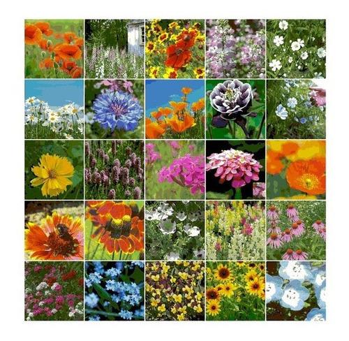 Imagem 1 de 10 de 200 Sementes De Flores Sortidas