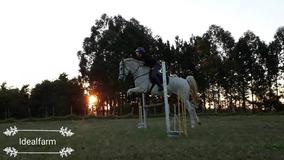 Cavalo Para Hipismo / Hipismo Rural / Salto / Equitação