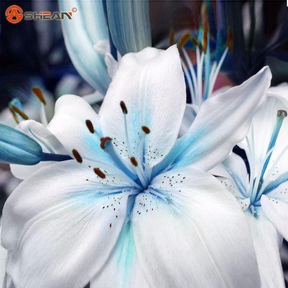 20 Sementes De Lirio Azul