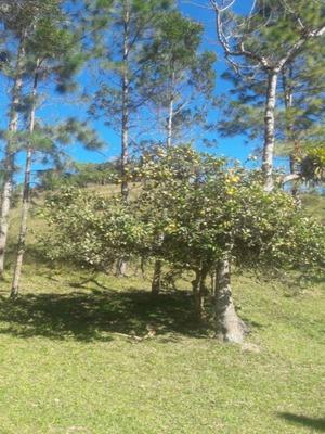 Chacara - 286 - 4905030