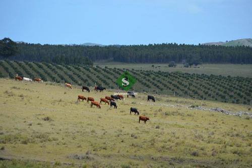 Venta De Chacra En Las Sierra De Los Caracoles, Unico Para Descansar- Ref: 16220