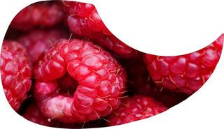 Escudo Palheteira Resinada Violão Aço Sônica Berries