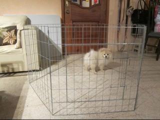 Jaula Para Perro 60cm Alto X 60cm Ancho Reja Para Animal