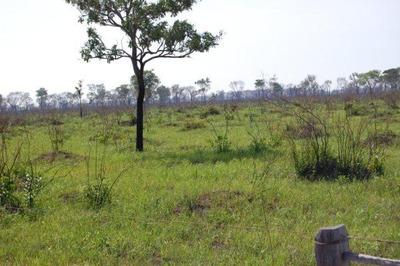Fazenda Rural À Venda, Região Do Rabicho, Corumbá-ms. - Codigo: Fa0207 - Fa0207