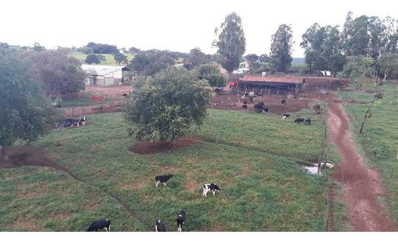 Fazenda Em Setor Central, Santa Cruz De Goiás/go De 4250m² 4 Quartos À Venda Por R$ 1.317.000,00 - Fa243132