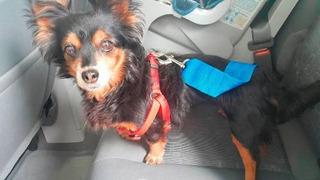 Arnes Seguridad Perros Mascotas Auto Camioneta Universal