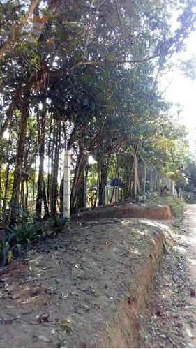Terreno Em Manoel Ferreira - Biritiba Ussu - 3645