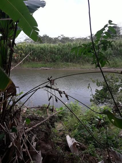 Se Vende Finca De 54 Hectáreas En Darien, Rio Chico