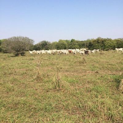 Fazenda A Venda Em Aquidauana - Ms (pecuária) - 726