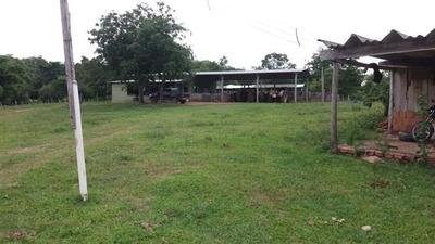 Fazenda A Venda Em Corguinho - Ms (pecuária) - 836
