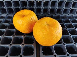 Semilla Naranja Agria (amarga) 20 Pz Facil De Germinar