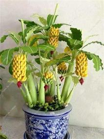100 Sementes De Bananas ( Frete Gratis ) Leia O Anuncio