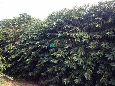 Fazenda 400 Ha Oliveira (mg) - Cod: Mta908