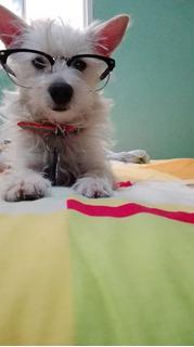 Adiestramiento Canino Personalizado En Bogota
