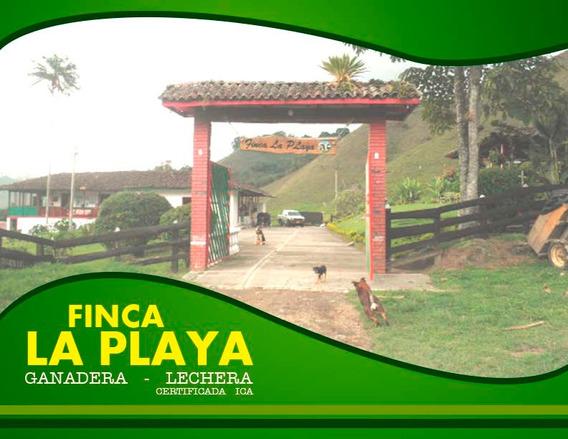 Finca Ganadera 218 Cds. Salento Vereda La Playa