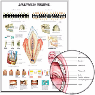 Poster 65x100cm Para Decorar Sala Odonto Dental Dentista