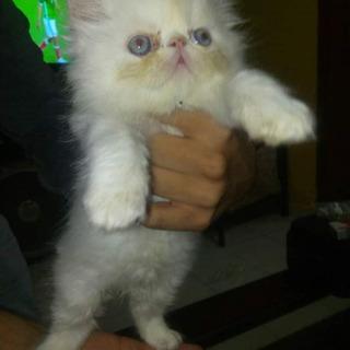 Hermosos Gatitos Para Reserva