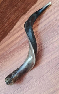 Shofar Kudu 22 Pulgadas Pulido De Israle