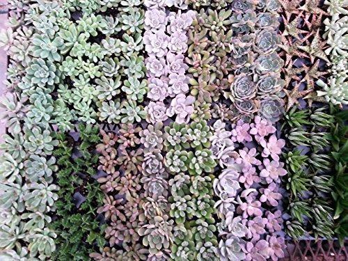 Imagen 1 de 1 de Air Flora Till00033 Suculentas Pequeño Multicolor