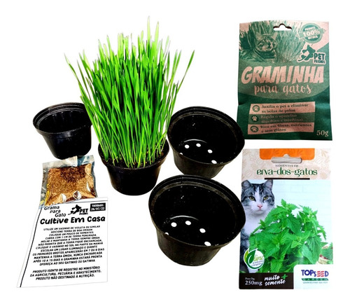 Kit Sementes De Grama E Erva Dos Gatos Catnip Pet 4 Vasos