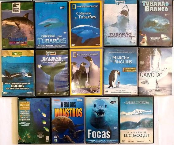 Dvd Coleção Tubarão - Documentarios Maritimos - 14 Filmes
