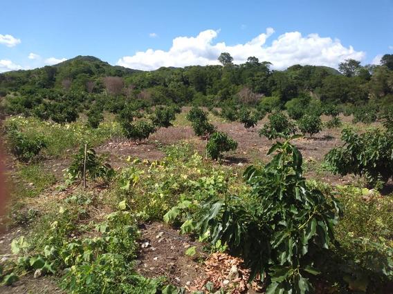 Finca Agrícola En San José De Ocoa