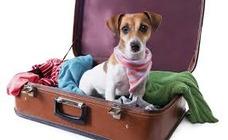 Excelente Servicio De Hospedaje Para Mascotas (sin Jaula)