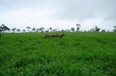 Fazenda Em Rio Sono - To, P/ Pecuária - 130