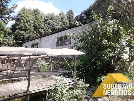 Alugo Estufas Para Plantação Hidropônica - 2885