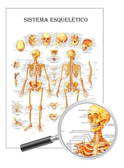 Poster Enfermagem Anatomia, Sistema Esquelético 40x60 Cm