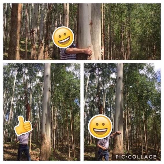 Terreno Com Reflorestamento No Bruno Marjor Gercino Sc