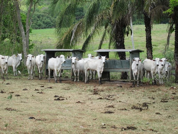 Fazenda Para Venda Em Corumbá, Região Do Rabicho - Fa0011_2-535774