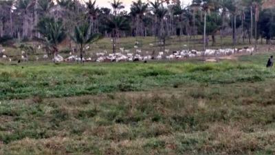 Venda Fazenda Iracema Brasil - 4135