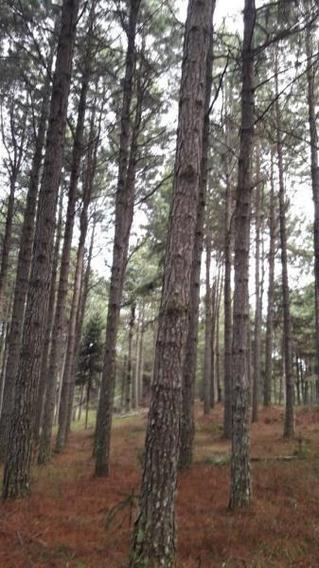 Fazenda Para Venda Em Imbituba, Fazenda 3000 M² Zona Rural Imbituba - Florestas R$ 40.000.000 - 36949_2-897905