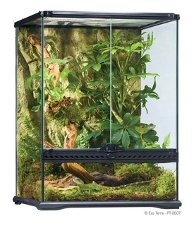 Small Tall Terrarium