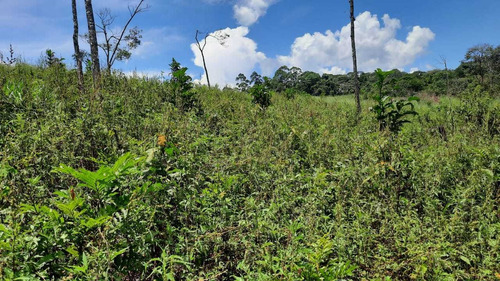 Imagem 1 de 14 de (k.a) Lotes Planos Rico Local Em Verde Natureza P Chacaras