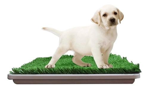 Bandeja Sanitaria Rejilla Mascota Cachorro Perro Ecologica