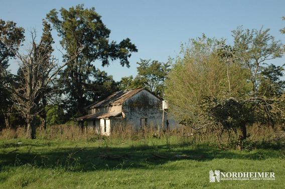 258 Ha Cañuelas, Buenos Aires - Campo Mixto Sobre Ruta 215 Cerca De Gobernador Udaondo