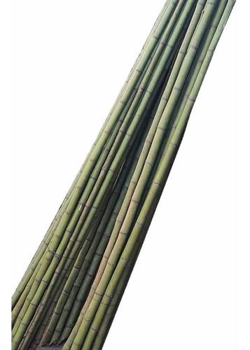 Caña Tacuara/bambu Paquete 20 Unidades X 2m De Alto -tigre