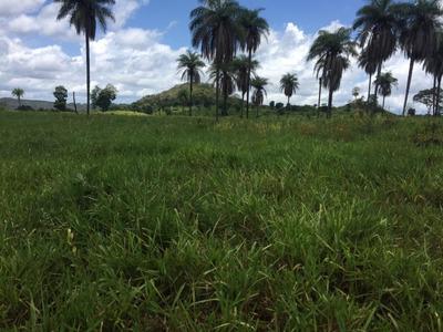 Fazenda A Venda Em São Valério -to (dupla Aptidão) - 1048