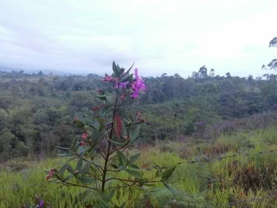 Hermosa Finca En El Municipio De Cajibio Cauca