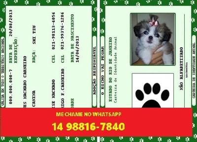 Rg E Certidão Para Cachorros E Gatos