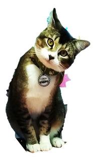Collar Placa Identificación Cascabel Mascota Envio Gratis